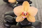 Yellow Moth Orchid And Black Stones On Weathered Deck
