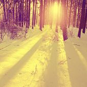 Image of sunset in the forest in vintage style.