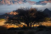 silhouette tree in Tafraout, Morocco... shallow dof