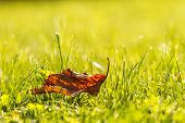 Lonely Leaves On Green Grass