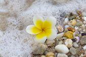 Plumeria Beach Side Spa Relaxation