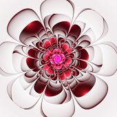 Beautiful Red Flower On White Background. Computer Generated Gra