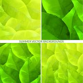 Set of green leaves backgrounds with foliage. Nature textures.