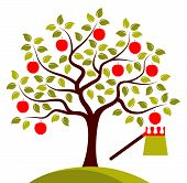 Apple Tree And Fruit Picker