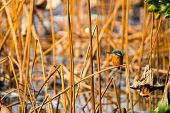 picture of marshes  - A bird sitting among yellow reed marshes - JPG