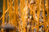 stock photo of marshes  - A bird stand in the middle of yellow reed marshes - JPG