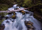 stock photo of olympic mountains  - Deception Creek in Olympic National Park - JPG