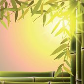 image of bamboo leaves  - Bamboo trees and leaves at sunset time - JPG