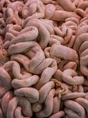 Raw pork intestines in market