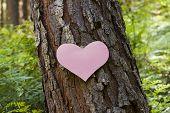 Heart Stuck To A Pine Tree