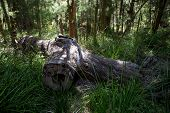 A giant fallen log in the Valley of the Ancients