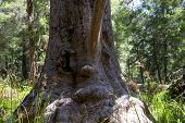 A funny tree face in a Valley of the Ancients