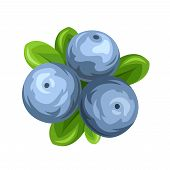 Blueberries isolated on white. Vector illustration.