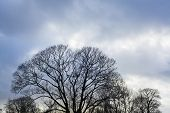 Winter Trees In Silhouette