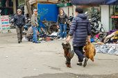 Woman carries three large roosters at an open market in Halong Bay