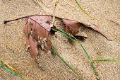 Leaf Of Tree In The Sand