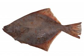 stock photo of flounder  - flounder fish cold isolated on white top view - JPG