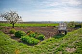 image of farm land  - Scenic Landscape of Lush Green Country Side and Rural Farm Land with Growing Patch in Springtime - JPG