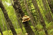 pic of cluster  - A photo of a cluster of mushrooms growing on a tree - JPG