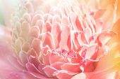 foto of torches  - Tropical flower colorful torch ginger on blur background - JPG