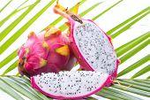 image of dragon  - Dragon fruit on palm leaf against white background - JPG