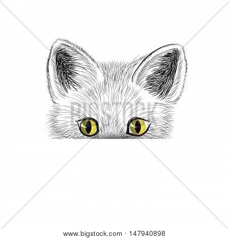 poster of Cat. Kitten face sketch. Hiding cat isolated. Cat head icon looking at camera. Puppy cat illustration