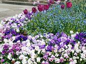Cheery Spring Garden Bed