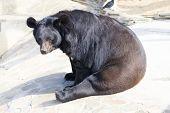 Bear seating