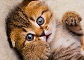 Little kitten close up, shallow DOF