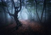 Mystical Autumn Foggy Forest In The Morning. Old Trees poster