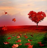 Tree of love in autumn. Red heart shaped tree at sunset.Autumn season concept.Beautiful landscape wi poster