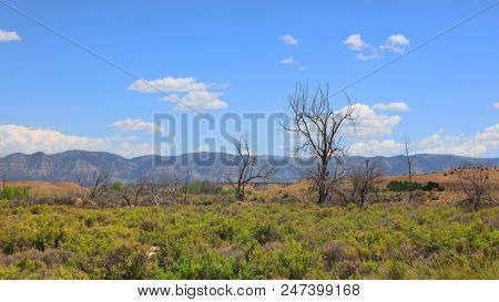 Dead trees in Utah desert