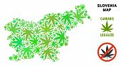 Royalty Free Cannabis Slovenia Map Collage Of Weed Leaves. Template For Narcotic Addiction Campaign  poster