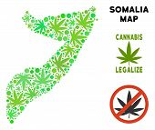 Royalty Free Cannabis Somalia Map Collage Of Weed Leaves. Concept For Narcotic Addiction Campaign Ag poster