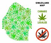 Royalty Free Marijuana Swaziland Map Composition Of Weed Leaves. Template For Narcotic Addiction Cam poster