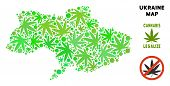 Royalty Free Cannabis Ukraine Map Collage Of Weed Leaves. Concept For Narcotic Addiction Campaign Ag poster