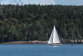 Sailboat Moves Past Maine Coastline - Forested, Rocky Coastline poster