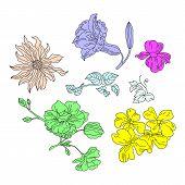 Cartoon Petal Vintage Floral Vector Bouquet Garden Flower Botanical Natural Peonies Illustration And poster