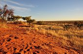red dunes at sunset, kalahari