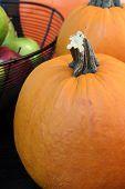 Autumn Bounty III
