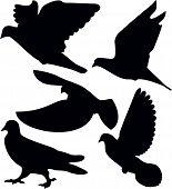 Pombos, um símbolo do pássaro, a ilustração. V-formação, Animal