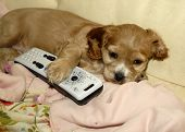 Puppy With Remote