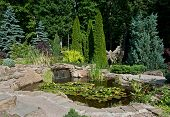 Landscape Design In Garden. View Of Small Pond With Water Lilies And Small Waterfall poster