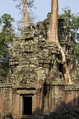 Ancient Stone Ruin In Angkor Wat Temple. Tropical Tree Growing From Temple. Khmer Kingdom Heritage R poster