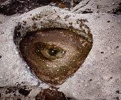 Unusual And Spooky Eye In A Rock Pool
