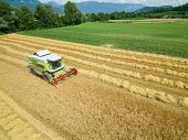 Wheat Harvest - Aerial Photography Of Combine Harvesting Grain - Agriculture . poster