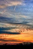 Migrating geese flocks at sunset
