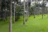 Green Lawn In A Palm Grove, Landscape poster