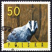 Postage stamp Poland 1965 European Badger