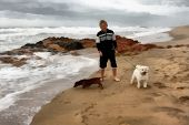 foto of stroll  - Painting of Boy Taking His Dogs for First Stroll on Beach - JPG